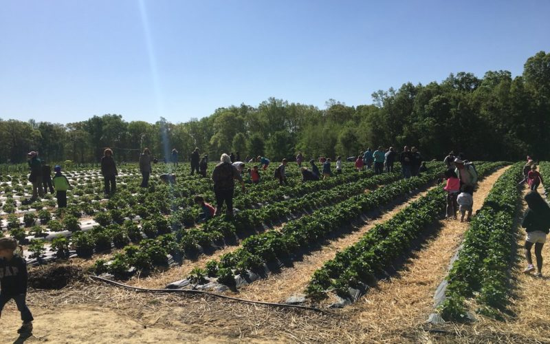 Wise Acres Organic Farm - Charlotte